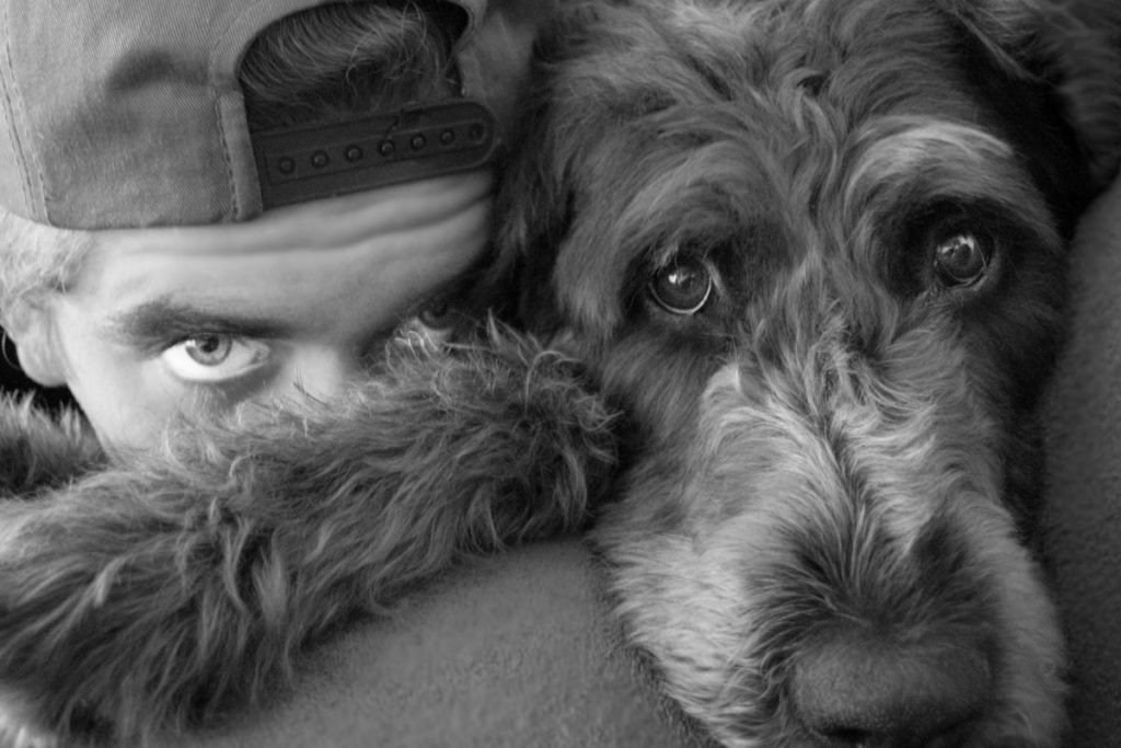 senior labradoodle with man to show how do Labradoodles bond to one person